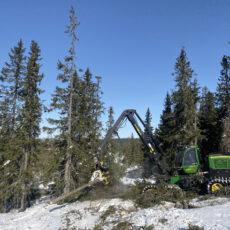 Skogsdrift og miljø